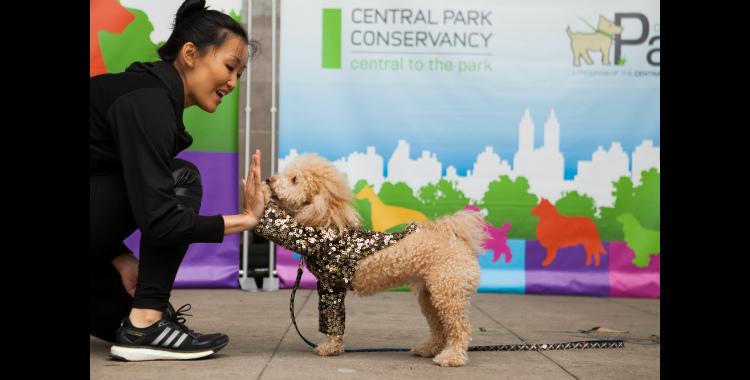 Dog Fair Central