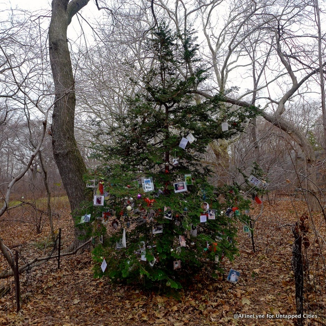 Hidden in the park is a secret Christmas Tree